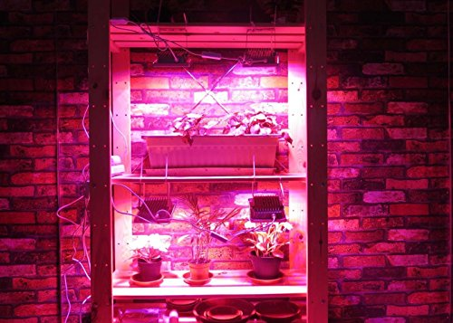 Purple grow light